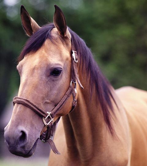 Horse Loans